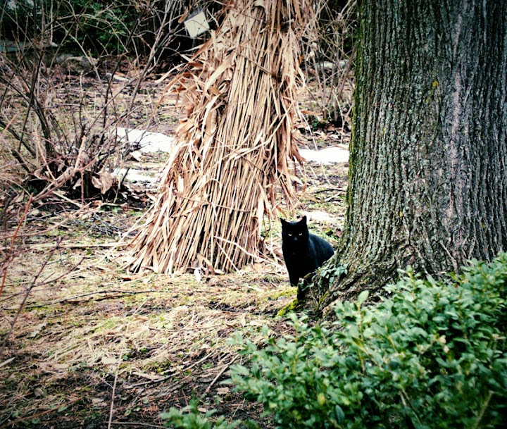 pisica gradina botanica iasi