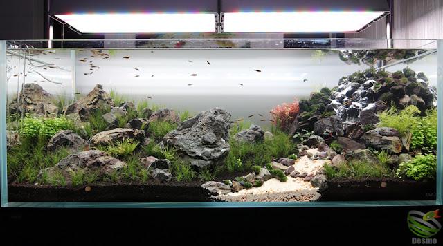 1200水草レイアウト水槽