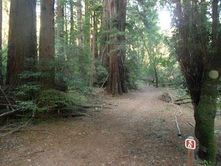 muir woods hiking trails