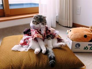 Gambar Wallpaper Kucing Lucu Banget 200030