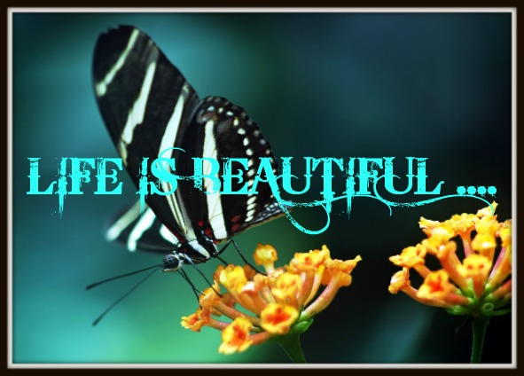 :: LIFE IS BEAUTIFUL ::