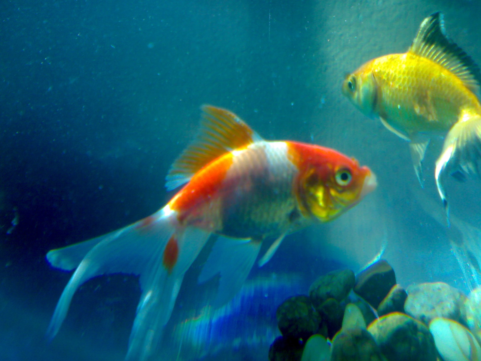 PicturesPool: Beautiful Fishes Wallpaper Pictures | Sea ...