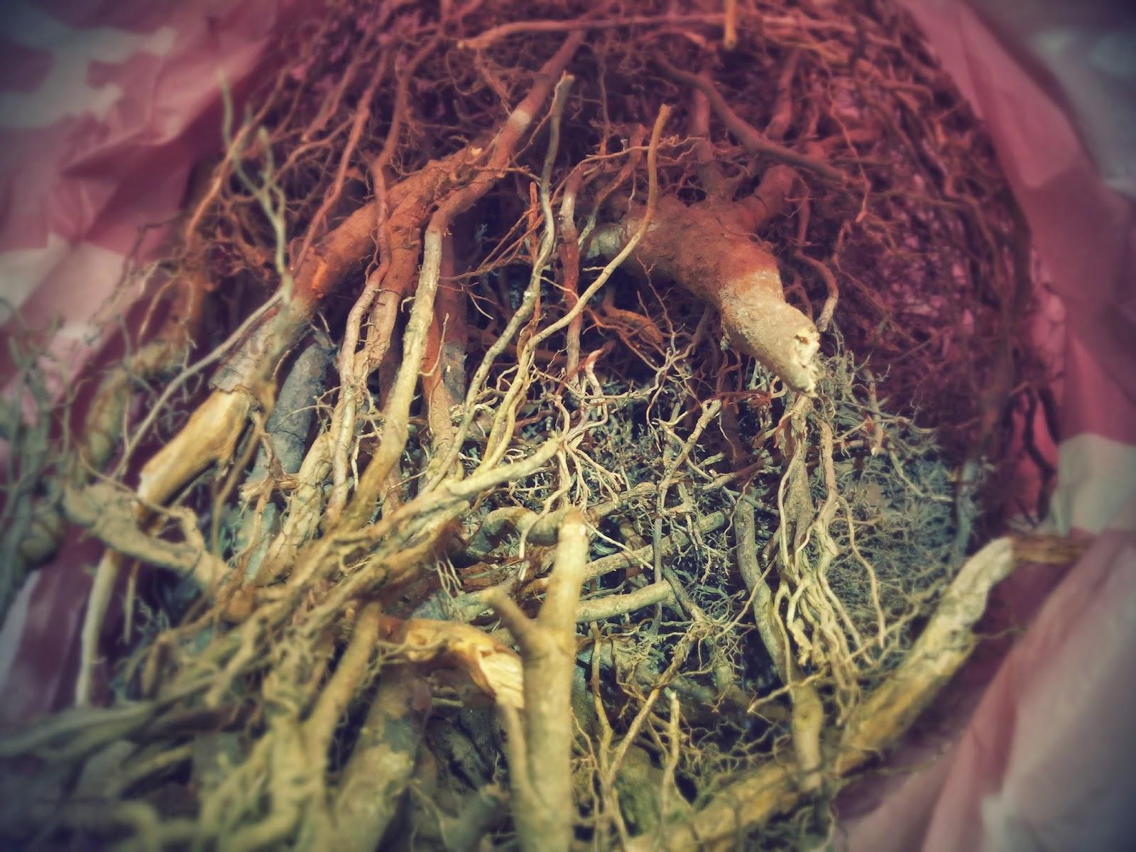 Massive Voodoo Tutorial: How to find good roots?