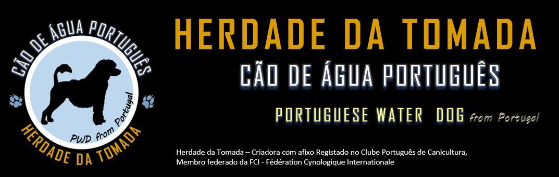 Herdade da Tomada - Cão de Água Português - Water Dog Portuguese Porties #herdadedatomada