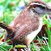 List Of Birds Of South Carolina - Birds Of South Carolina Pictures