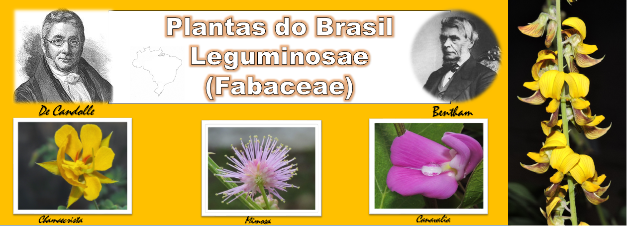 The Flowering plants - Leguminosae - Fabaceae