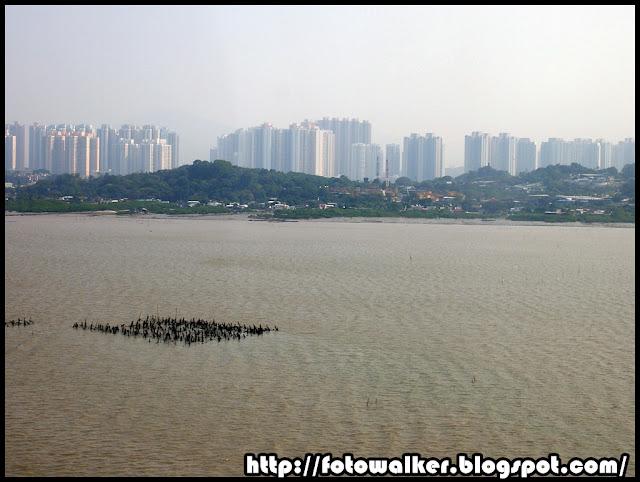 深圳灣公路大橋