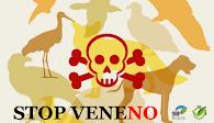 Veneno No - Actúa