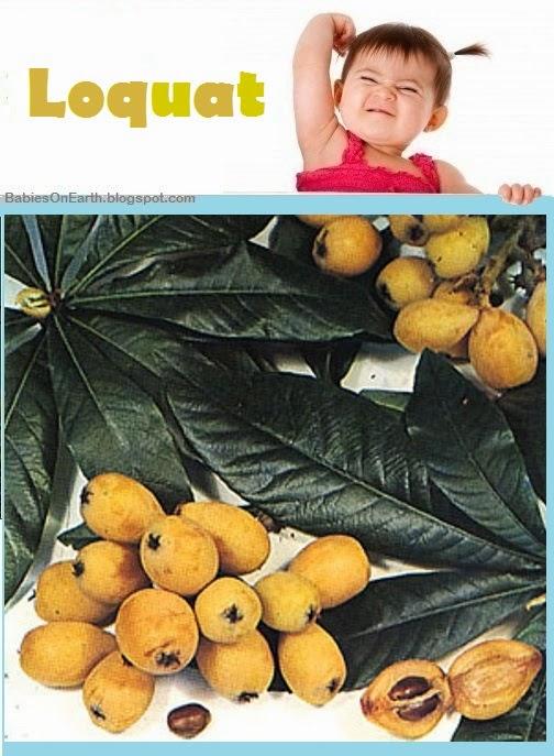 Baby Loquat
