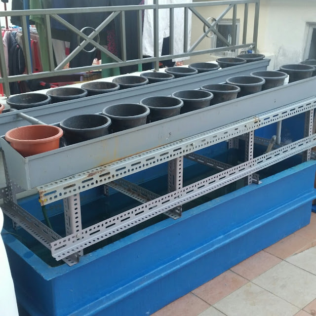 Diy Water Pump In Aquaponics System Potted Media Base