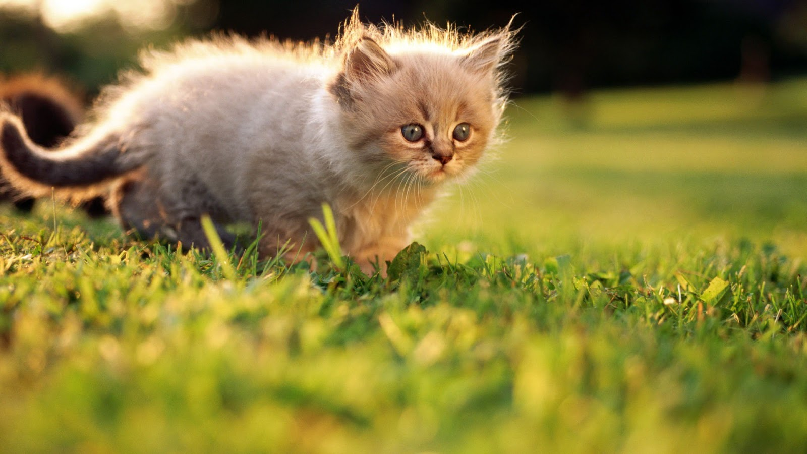 cute kittens