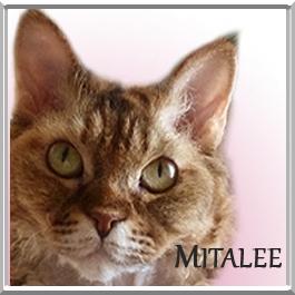 Mitalee
