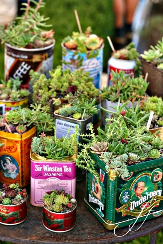 decorating a home with succulents