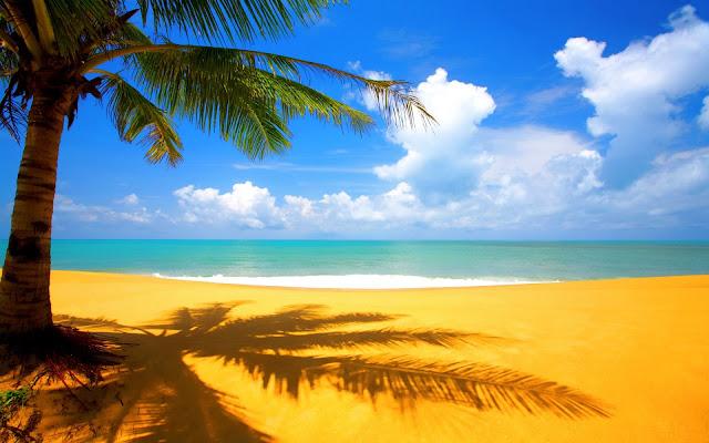Tree Beach