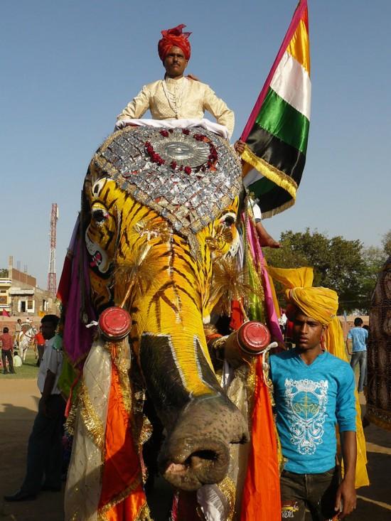 gajah lukis karnaval di India