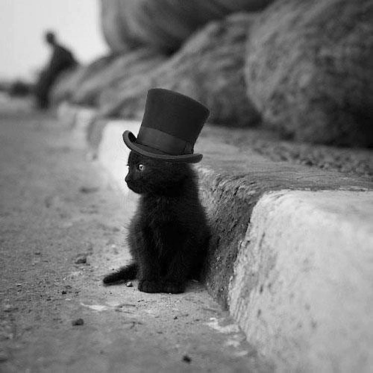 Cute and Funny Pictures and more: Baby Black Cat in Top Hat