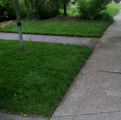 Section 2 and 3 After Lawn Renovation
