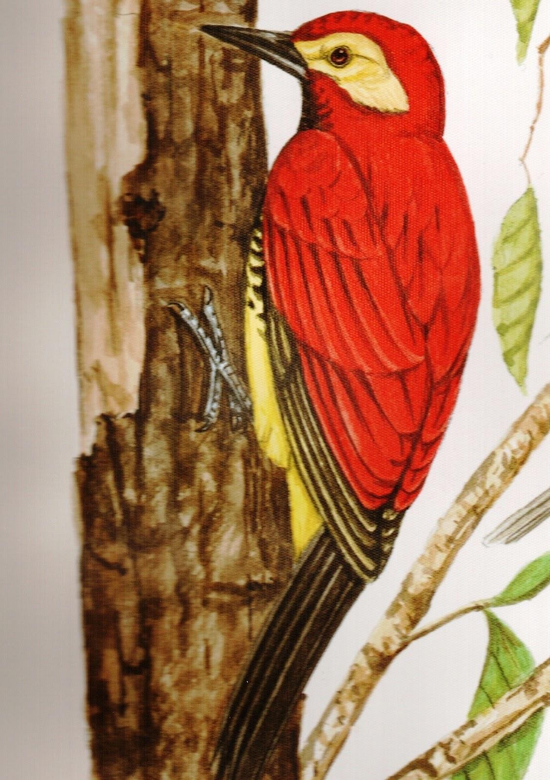 Mario Vsconez Ecuador 46 Los incendios y las aves del Parque