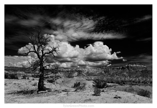 Ghost ranch tree cliffs and clouds