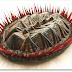 Crean un molusco de 390 millones de años con un escaner 3D.
