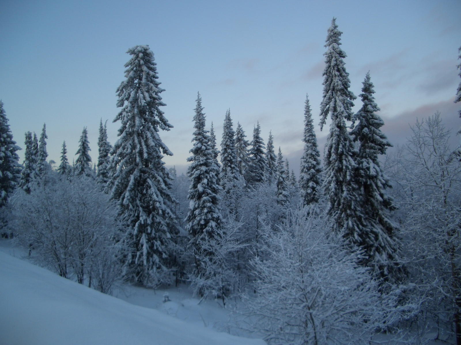 the taiga The taiga lies between the tundra to the north and temperate forests to the south alaska, canada, scandinavia, and siberia have taigas in russia, the world's largest taiga stretches about 5,800 kilometers (3,600 miles), from the pacific ocean to the ural mountains.