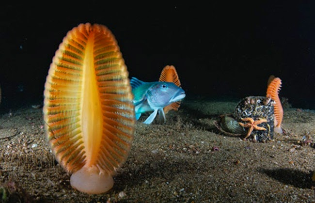 أجمل الأسماك الاستوائية الملونة   - صفحة 4 Colorful-tropical-fishes-33