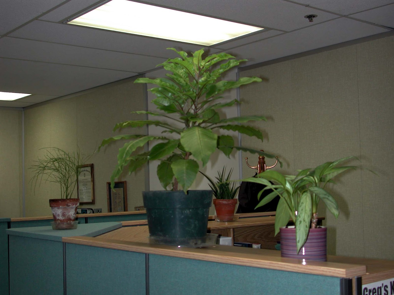 A Few Plants On The Walls Of A Cubicle Brighten Up A Work Space And Help  Clean The Air, Good