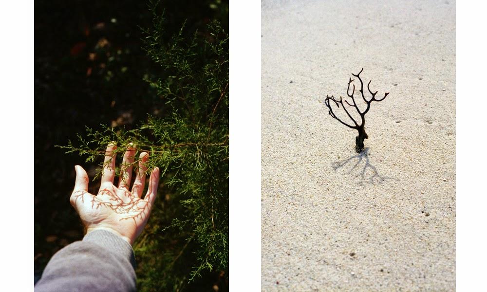 hand, wood, sand