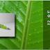 Linux Mint 15 (Olivia) - Disponível !!!