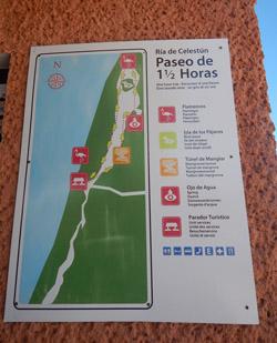 Flamencos en Celestún