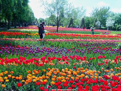 Tulipas e mais tulipas