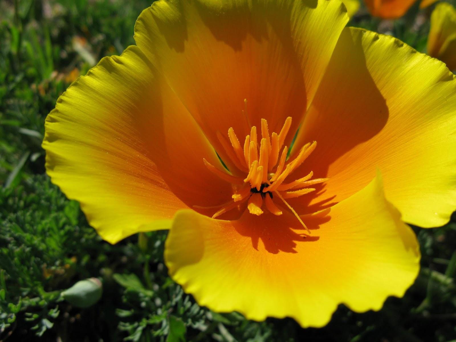 Flores Mensagens Enviar por E mail ou Orkut - Fotos De Flores Para Orkut