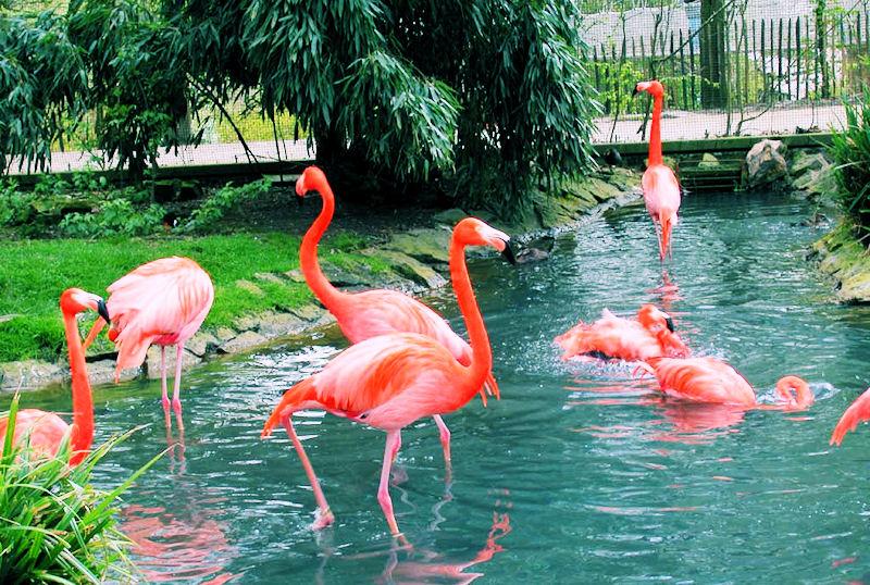 Paraíso de los flamingos (Aves exóticas)
