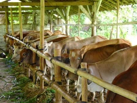 Investor asal Brazil siap berinvestasi di bidang peternakan sapi senilai total kurang lebih Rp1 triliun di Pulau Buru, Provinsi Maluku, dengan total kapasitas sebesar 200.000 ekor sapi.
