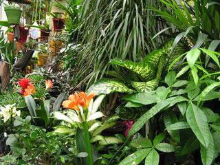 lol dz arbustes et plantes vertes en vente sur internet
