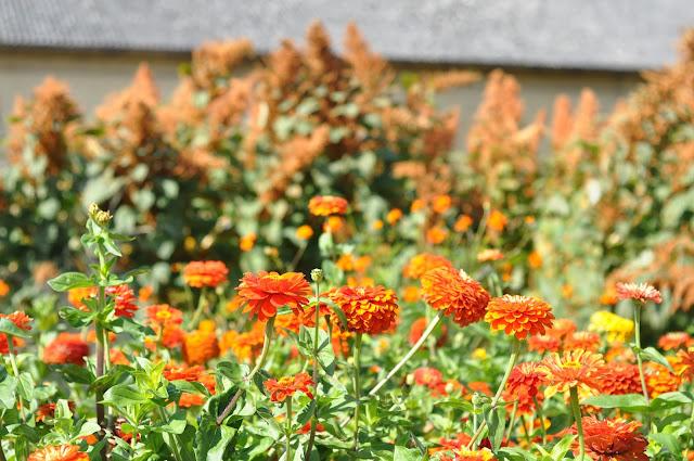 orange og gule frøkenhat