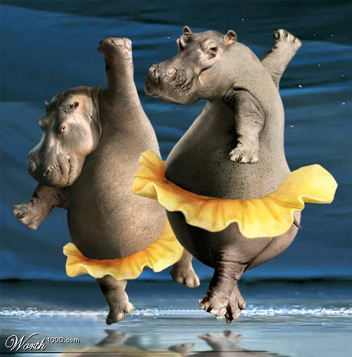 Funny Animals Dancing New Pictures