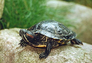 Soñar con tortugas ¿Que significa?