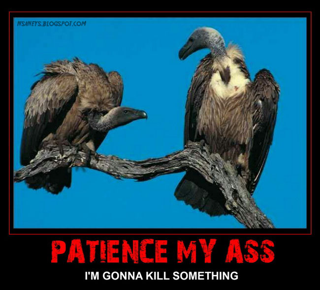 vultures-patience-my-ass.jpg