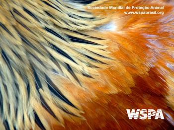 Sociedade Mundial de Proteção Animal