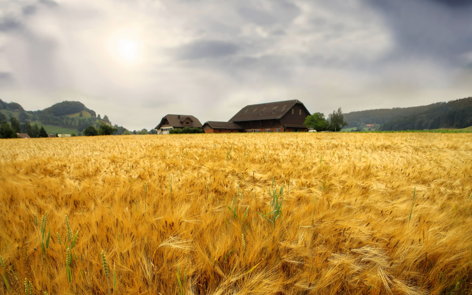 Wheat field wallpapers most beautiful places in the for Farmhouse wallpaper