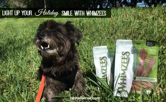Oz the Terrier says Light Up Your Holiday Smile with Whimzees