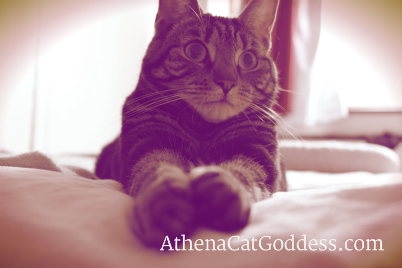 Athena Cat Goddess