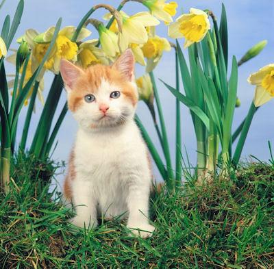 Pequeño gatito entre las flores del jardín - Little kitten