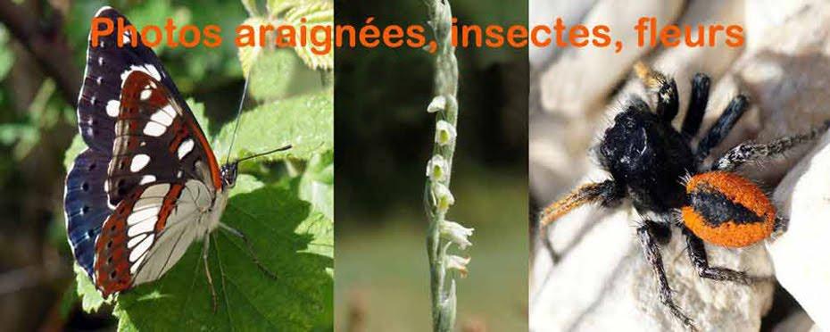 Photos araignées insectes fleurs henri maleysson