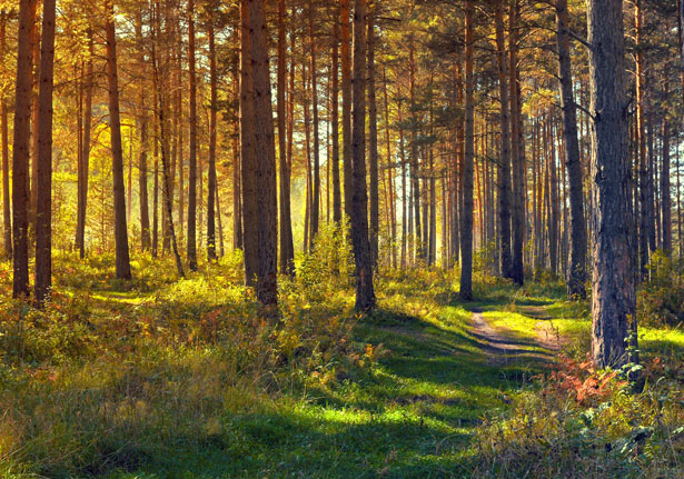 forest our lifeline Forests are called our lifeline they are an important renewable natural resource they are useful in the following ways: i plants purify air by utilizing carbon dioxide in the atmosphere.