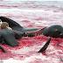 სისხლის ზღვა