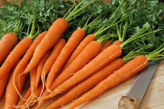 Całe korzenie marchewki / marchwii