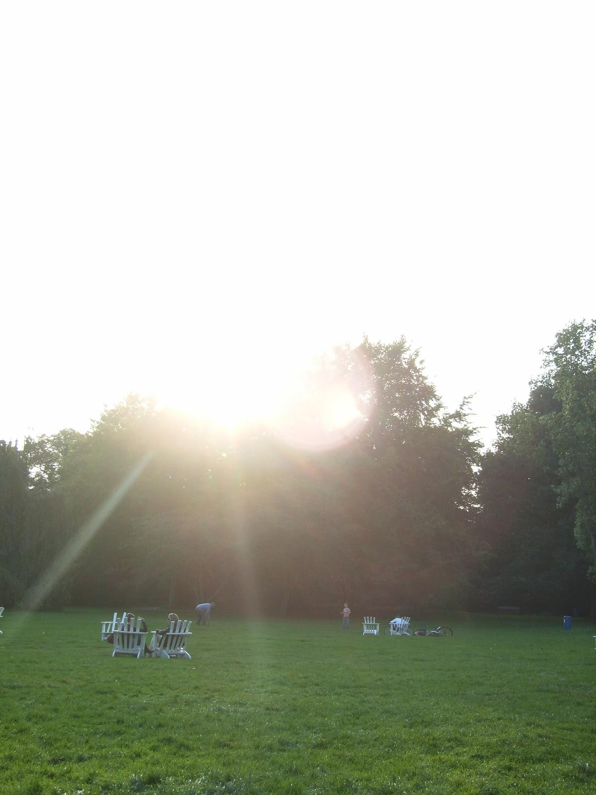 Stadtpark - Wiese - Bäume - Sommer