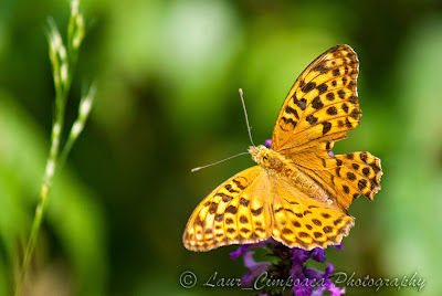 FlutureButterflyTagfalterPapilioΠεταλούδα